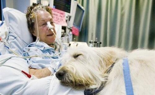 Hospital no Canadá permite a entrada de animais de estimação