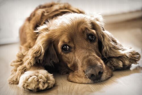 As alterações no estado de humor de nossos cães