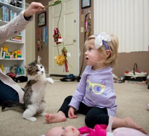 Melhores amigos: um gatinho de três patas é adotado por uma menina com um braço amputado