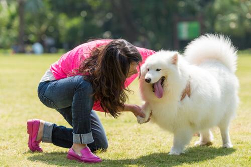 amor entre cães e pessoas