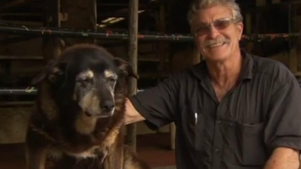 Cachorro mais velho do mundo
