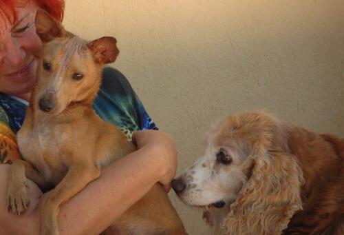 Mulher com cachorros