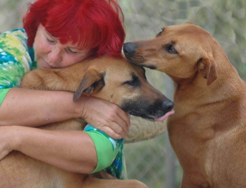 Mulher cuida de 200 cães abandonados
