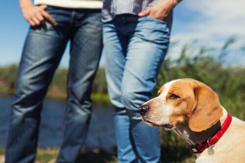 É verdade que os animais de estimação sentem ciúmes quando estamos namorando?