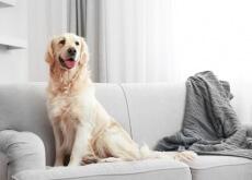 Pelos de cachorro pela casa
