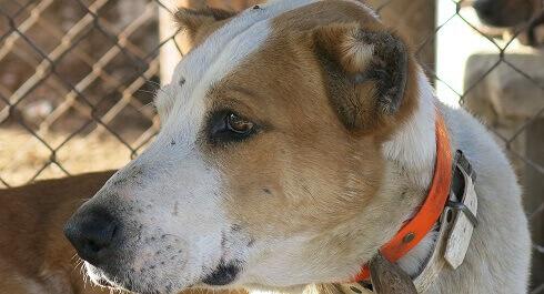 pessoas presas por mutilar cães