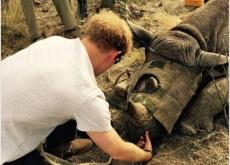 Príncipe Harry com rinocerontes
