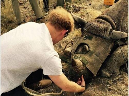 Príncipe da Inglaterra salva rinocerontes
