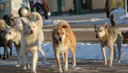 Cachorros na rua
