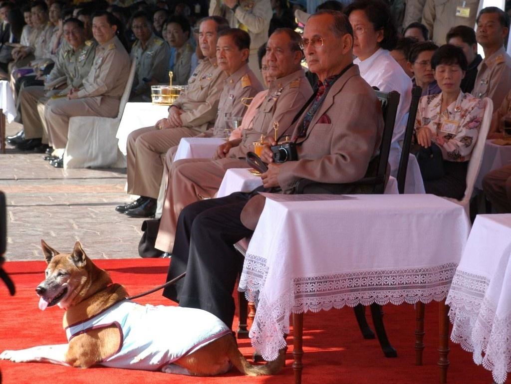Rei da Tailândia adota cães de rua