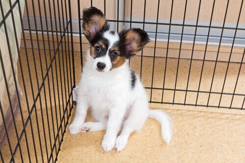 Cachorro em gaiola