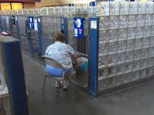 Uma senhora lê para cães de um abrigo para que eles não se sintam sozinhos