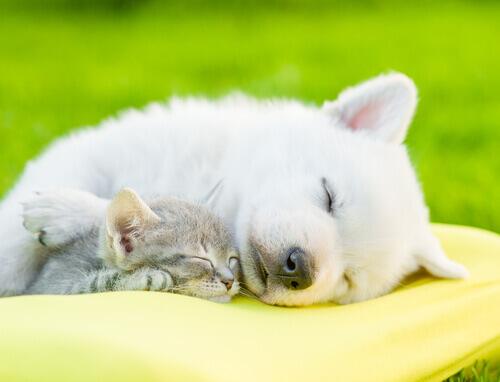 sono dos animais
