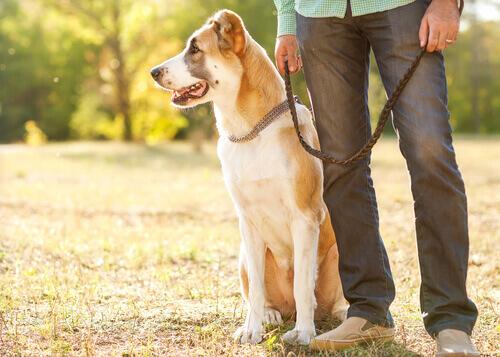5 truques para tirar os pelos de cachorro das roupas