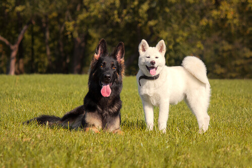 um-cão-agrada-o-outro