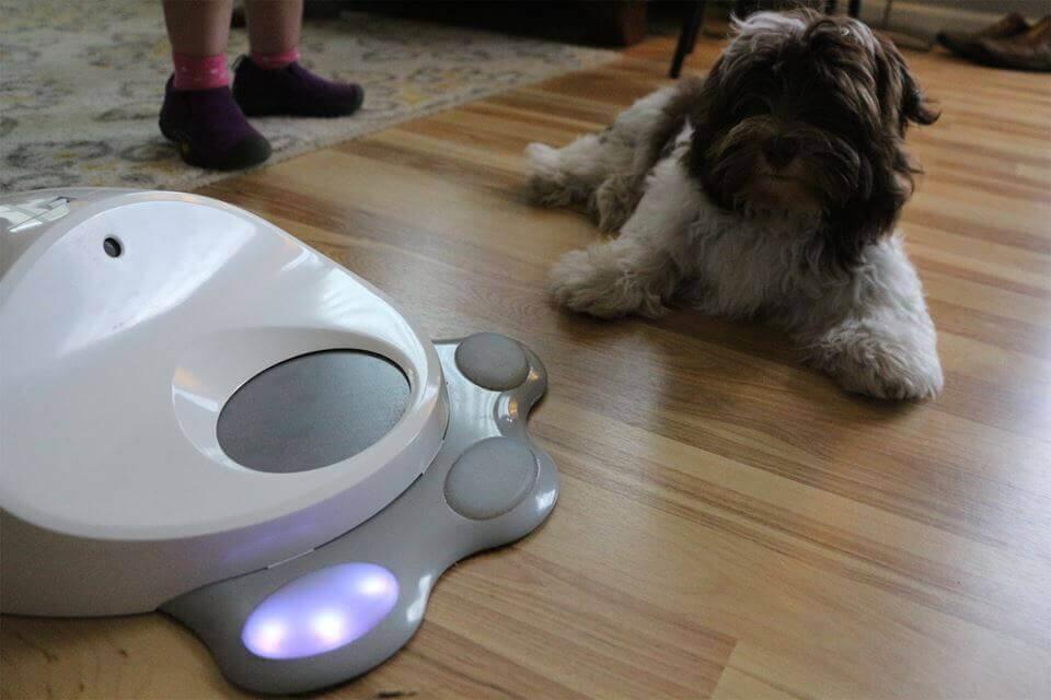 Seu cão já pode ter seu próprio videogame