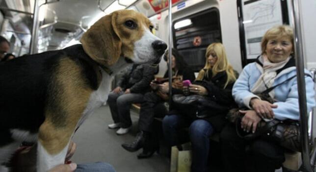 Cachorro no metrô