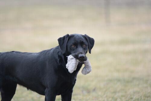 Conhe;a 7 objetos perigosos para o seu cão
