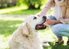 80_por_cento_das_pessoas_nao_sabem_como_cuidar_de_seus_animais