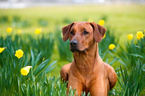 Remédios caseiros para cães