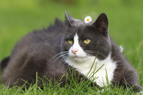 Como cuidar da aparência de seu gato