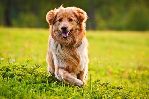 10 dicas para que a pelagem de seu cão seja maravilhosa