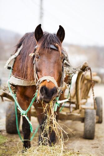 Cavalo abusado