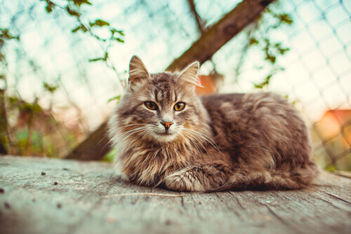 10 razões pelas quais é bom adotar um gato adulto