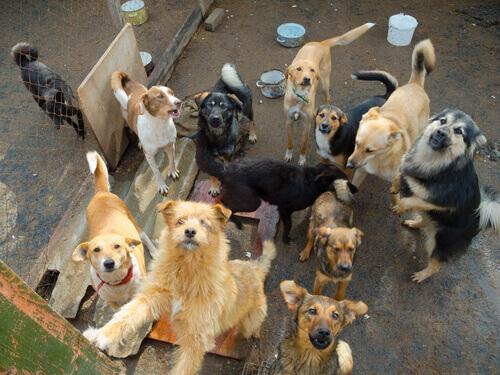 Como ajudar abrigos que cuidam de cães e gatos?
