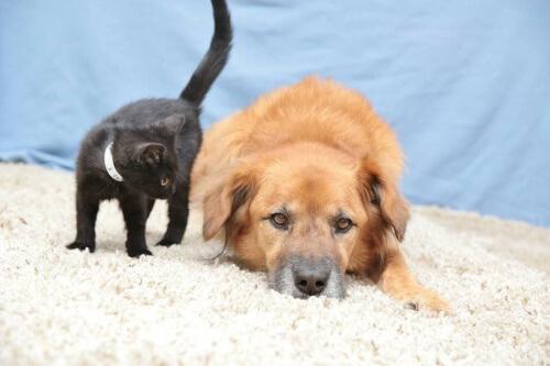curar uma queimadura em cão ou gato