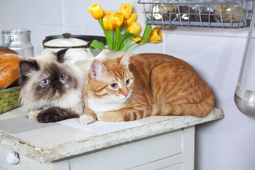 Você é alérgico a gatos?
