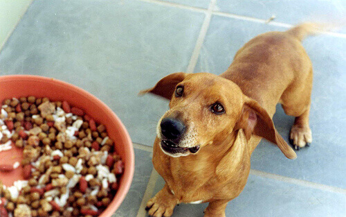 Cachorro e ração