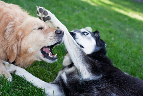 dois cães se deem bem