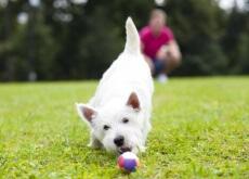brincar_com_cachorro