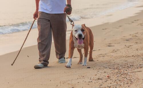Homem passeando com cachorro na praia