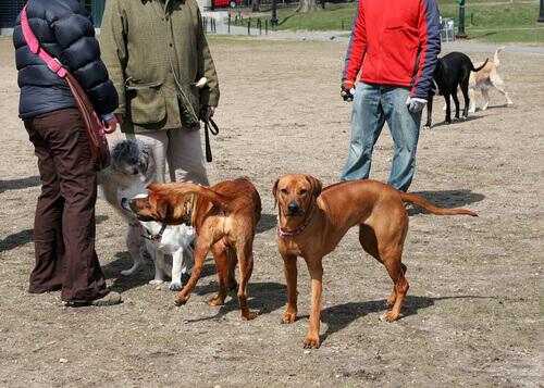 Cachorros e donos
