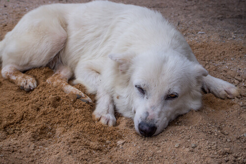 Cachorro deitado na terra