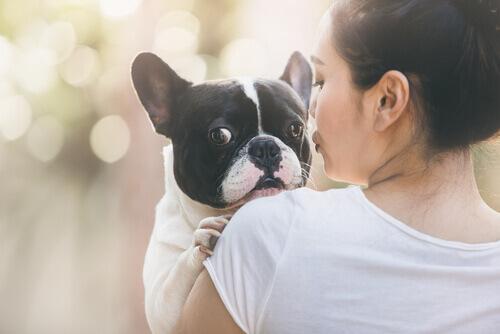 Carta de um cão para sua dona