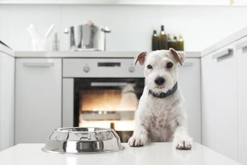 Cachorro na cozinha