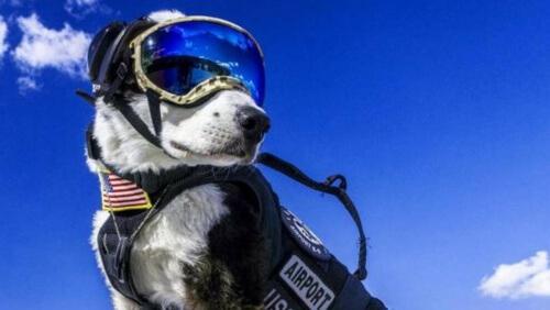 cão-controlador-aéreo-e1456775900768