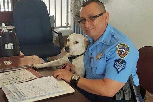 Cão de rua se torna cão policial