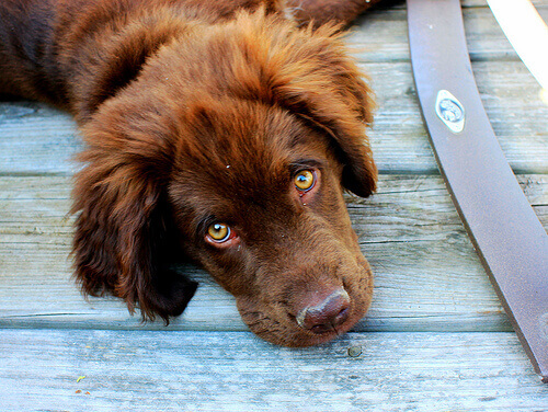 Cachorro olhando para a câmera