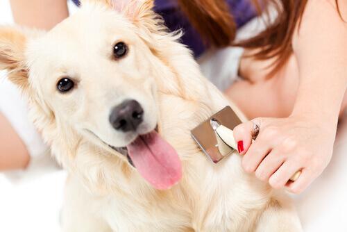 Cachorro tendo o pelo escovado