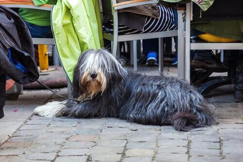 cão-em-barcelona