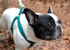 Como saber se meu animal de estimação está enxergando mal?