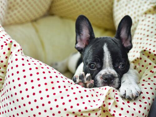 limpar a cama dos cães