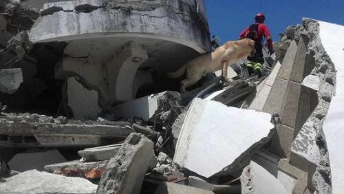 Os cães de resgate no Equador: um grande apoio
