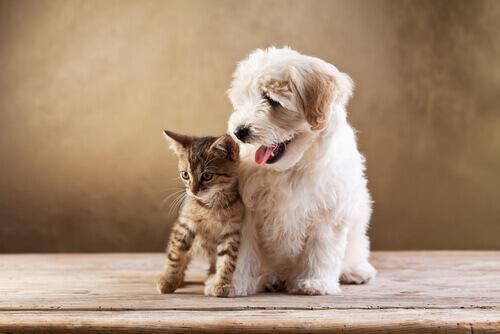adotar um gato