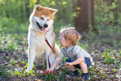 Como um cão muda a vida de uma criança surda