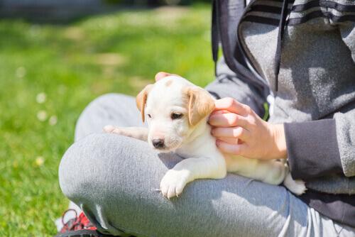 cachorro-um-novo-amigo